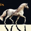 Cavalia Show Extends 10 More Days in Singapore Till End September