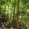 Bukit Timah Nature Reserve reopens today after restoration works complete