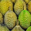 MSW Durian prices are down to just S$15 per kg, its lowest since 2016 according to Ah Seng